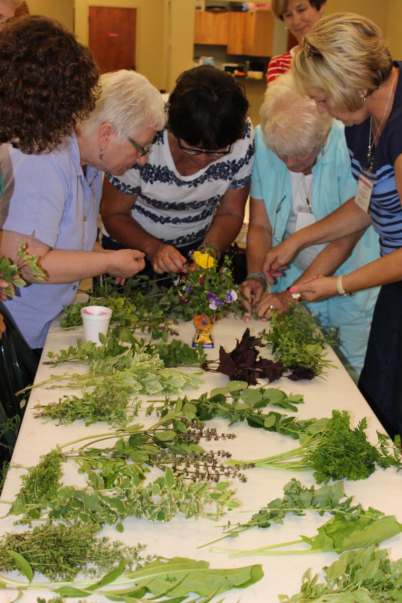 Volunteers studying plants