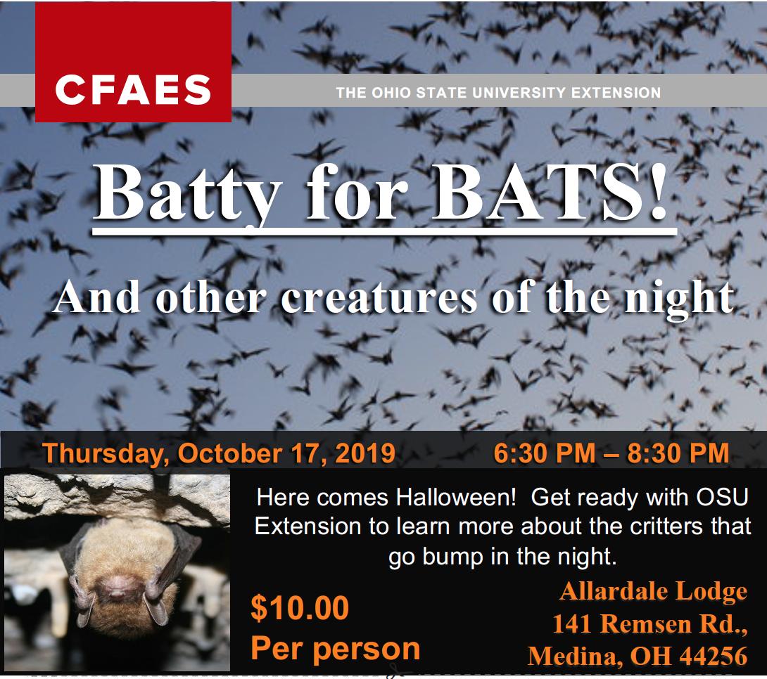 Bat registration flyer