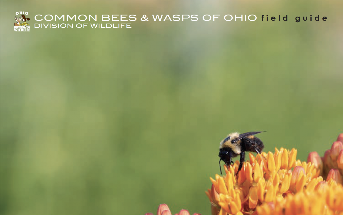 cover of common bees and wasps of Ohio